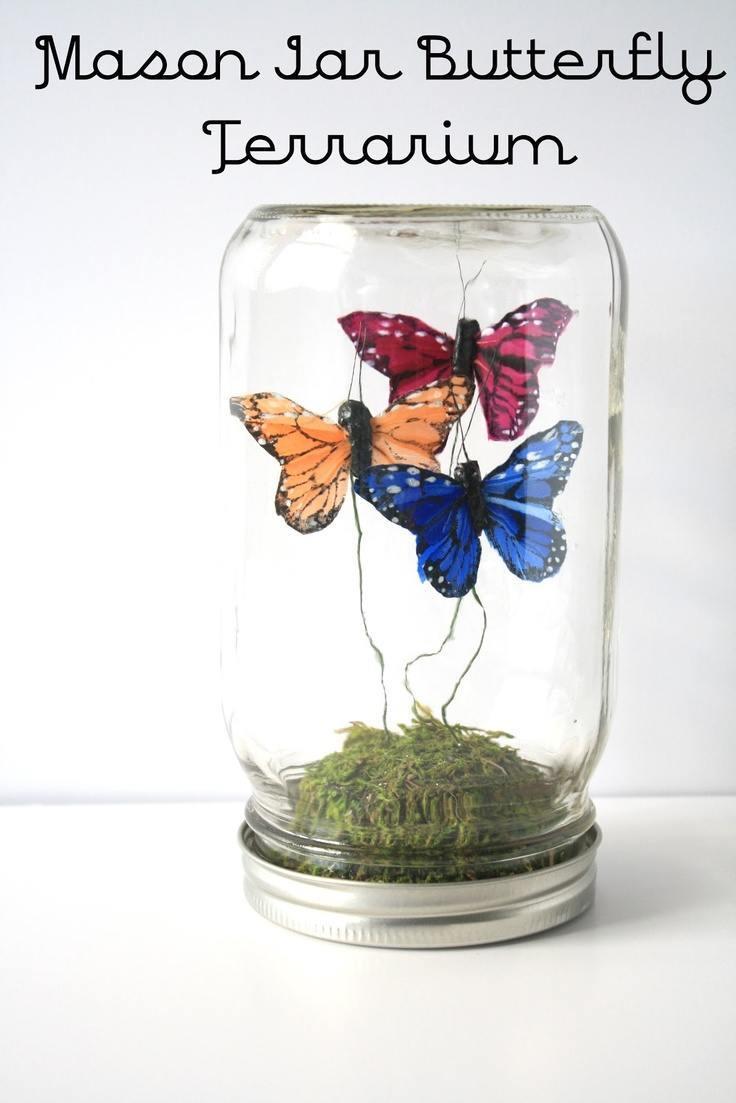 masor jar butterfly terrarium