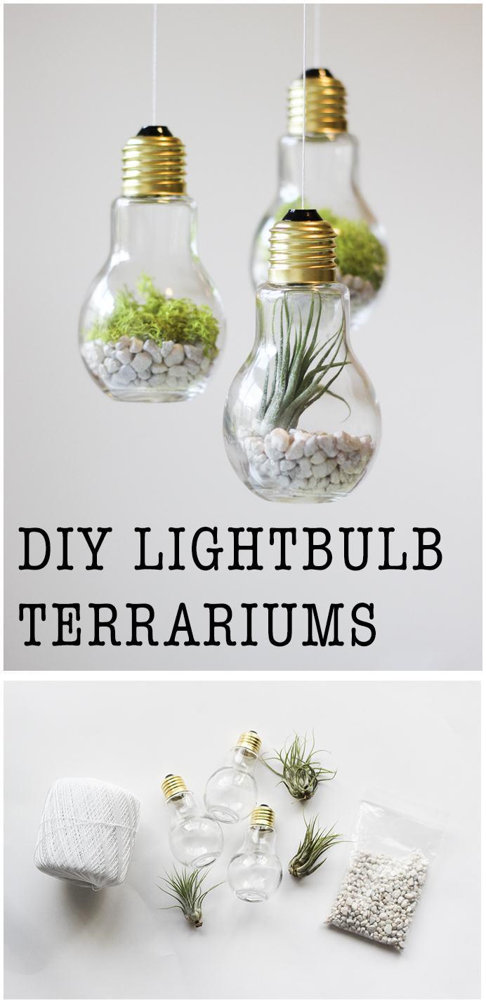 DIY Lightbulb Terrariums