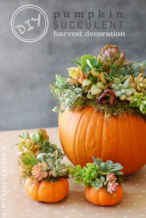 diy pumpkin succulent harvest decoration