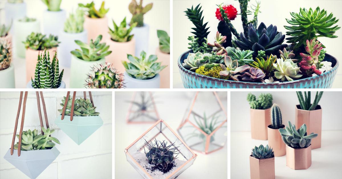 29 Diy Succulent Planter Ideas Creative Ways To Display Succulents Homelovr